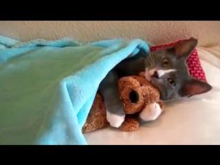Кот как ребёнки тоже любит спать с Мишкой !
