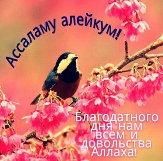Доброе утра открытки на чеченском, новогодние открытки прикольные