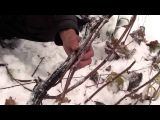 Обрезка взрослого куста винограда. Консультант С. В.Ксенофонтов Сайт