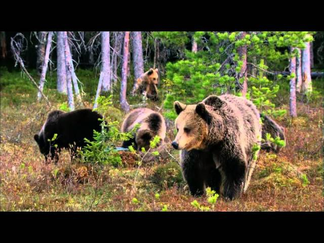 BBC Дикая природа России - Фильм о фильме