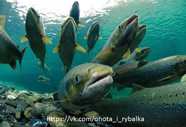 приманки на хищную рыбу