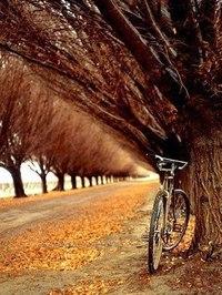 Отцвели цветы, падают листья, птицы молчат, лес пустеет и затихает.ОСЕНЬ. - Страница 6 DPd4Pll8cXc
