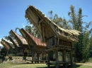 80 чудес света: Индонезия остров Сулавеси: Дома духов: Часть 13
