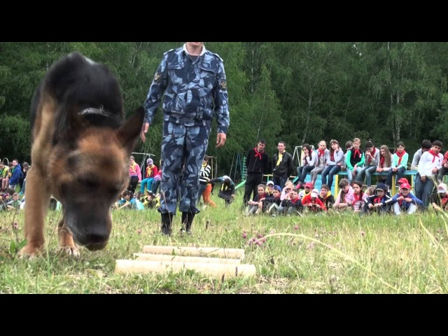 Почему волкособов не тренируют на людях рассказал кинолог ИК 13 ГУФСИН России по РБ