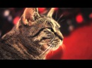 Collective Soul -- Shine Cat Cover