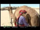 Turkmen music clip TDM