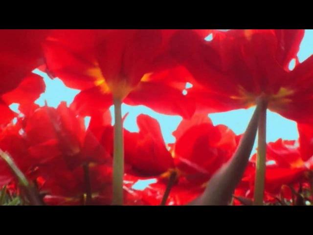 Pepperminta Trailer