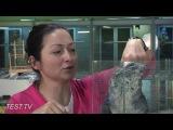 TEST.TV Шиншилла - не только ценный нежный мех!