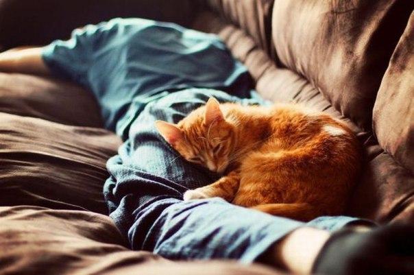 Картинки по запросу Кошки как энергоинформационный прибор