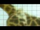 BBC Ребятам о зверятах Серия 24 Жираф Джордж