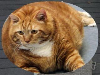 Песенка про толстых котят