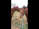 ЧПХ представляет: Лошадь это самое умное животное, смотрите вы будете в шоке
