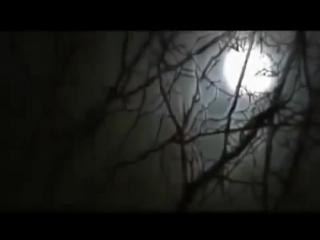 Живая тема №35 Лесные монстры от 18.03.2013