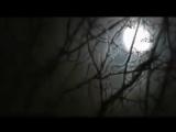 Живая тема 35 Лесные монстры от 18.03.2013