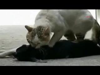 аж до слёз жалко(((а кто-то говорит что кошки не преданные!((((