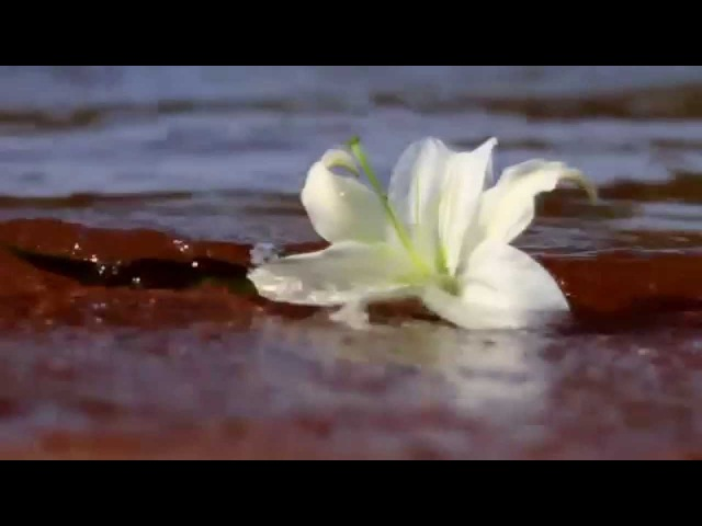 Ф. Шуберт - Вечерняя серенада - F. Schubert – Serenade