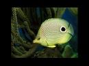 Чарующие Голоса Дельфинов и Целительные Звуки Природы ☯ Релакс Музыка для отдыха Meditation Music