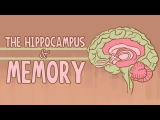 What happens when you remove the hippocampus - Sam Kean
