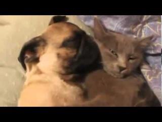 Собака храпит и не дает спать коту