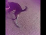 мой маленький Тасманский дьяволёнок!