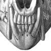Палеонтология и эволюция млекопитающих