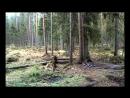 Футаж: Звуки природы. Весенний лес в Эстонии. Footage Sounds of Nature Spring Forest in Estonia. 28.04.2015. Авторская запись.