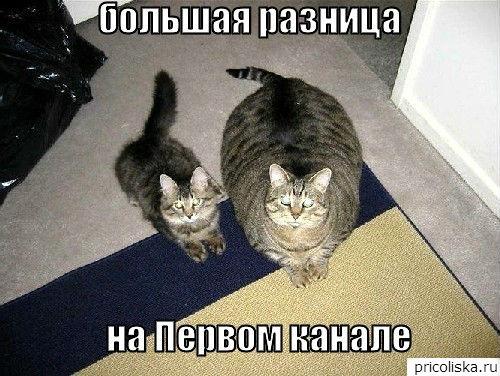 http://cs623722.vk.me/v623722528/2e0b3/UQl-LS9qXXk.jpg