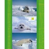 """Тетрадь на кольцах """"animal planet"""", клетка, 160 листов, Action!"""