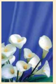 """Адресная папка """"с юбилеем"""". цветы, Ульяновский Дом печати"""