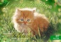 """Альбом для рисования """"рыжий котенок"""", 40 листов, АппликА"""