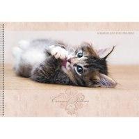 """Альбом для рисования """"карамельный котенок"""", 20 листов, Канц-Эксмо (Listoff, Unnika Land)"""