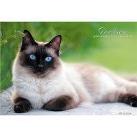"""Блокнот """"красивая кошка"""", 40 листов, клетка, Канц-Эксмо (Listoff, Unnika Land)"""