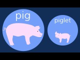 The Baby Animals Song