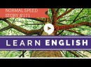 Deep English - Death of an Ancient Tree (normal speed)