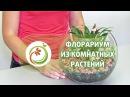 Как сделать Флорариум из комнатных растений Мастер класс практической флористики