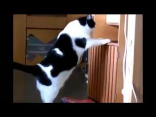 Жирный кот застрял
