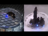 Wirelessly controlled mice using light