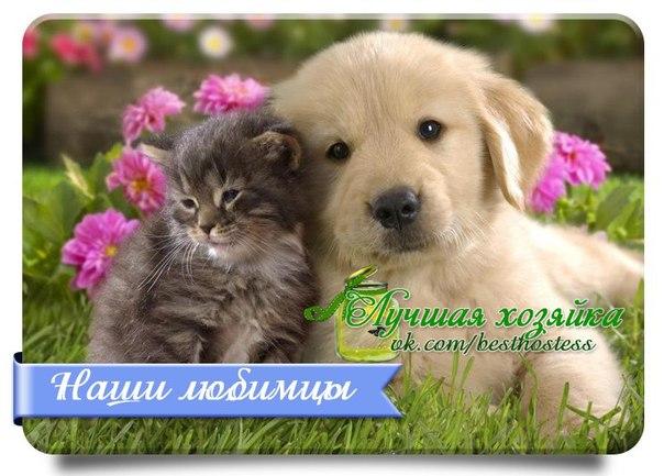 vk.com/album-45409582_206739798