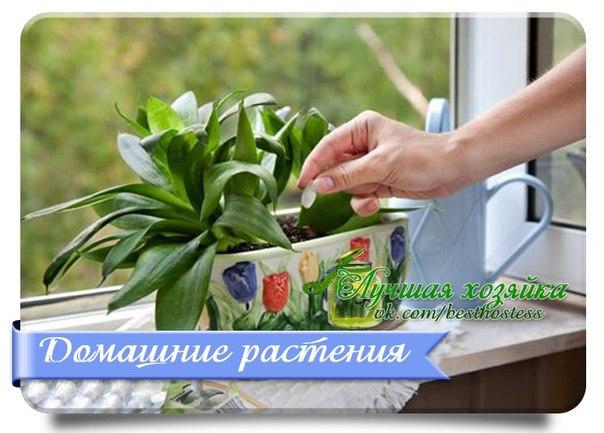 vk.com/album-45409582_165005235