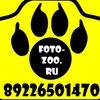Профессиональная фотосъёмка животных в Сургуте