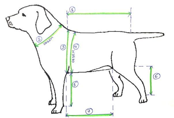Дождевик для собак как сшить