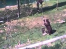 A esta mamá oso no le causo mucha gracias que su hijito se hubiera subido a este arbol