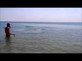 Дельфин на пляже в ст  Благовещенская, Анапа 13 06 2015г