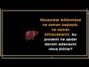 Özünü bərpa edə bilən yeganə orqan Qaraciyə
