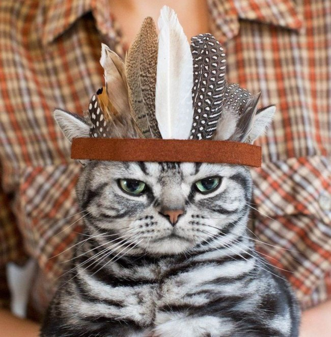 кот индеец