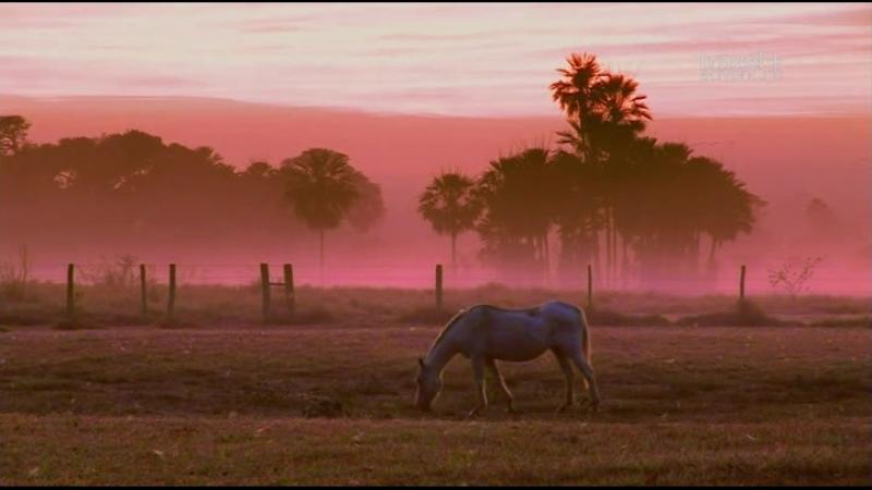 Путешествие на край света с Артом Вольфом: 18 серия. Бразилия - Пантанал