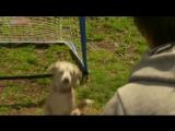Мохнатый вратарь: собака, установившая мировой рекорд, по ловле мяча лапами (2015)