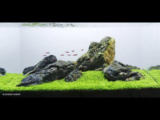 Huge aquarium compilation 500+ Aquascapes