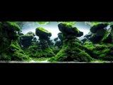 2015 AGA Aquascaping contest best aquariums