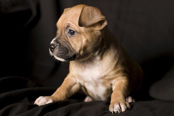 Все о собаках какие бывают собаки важное о содержании собак
